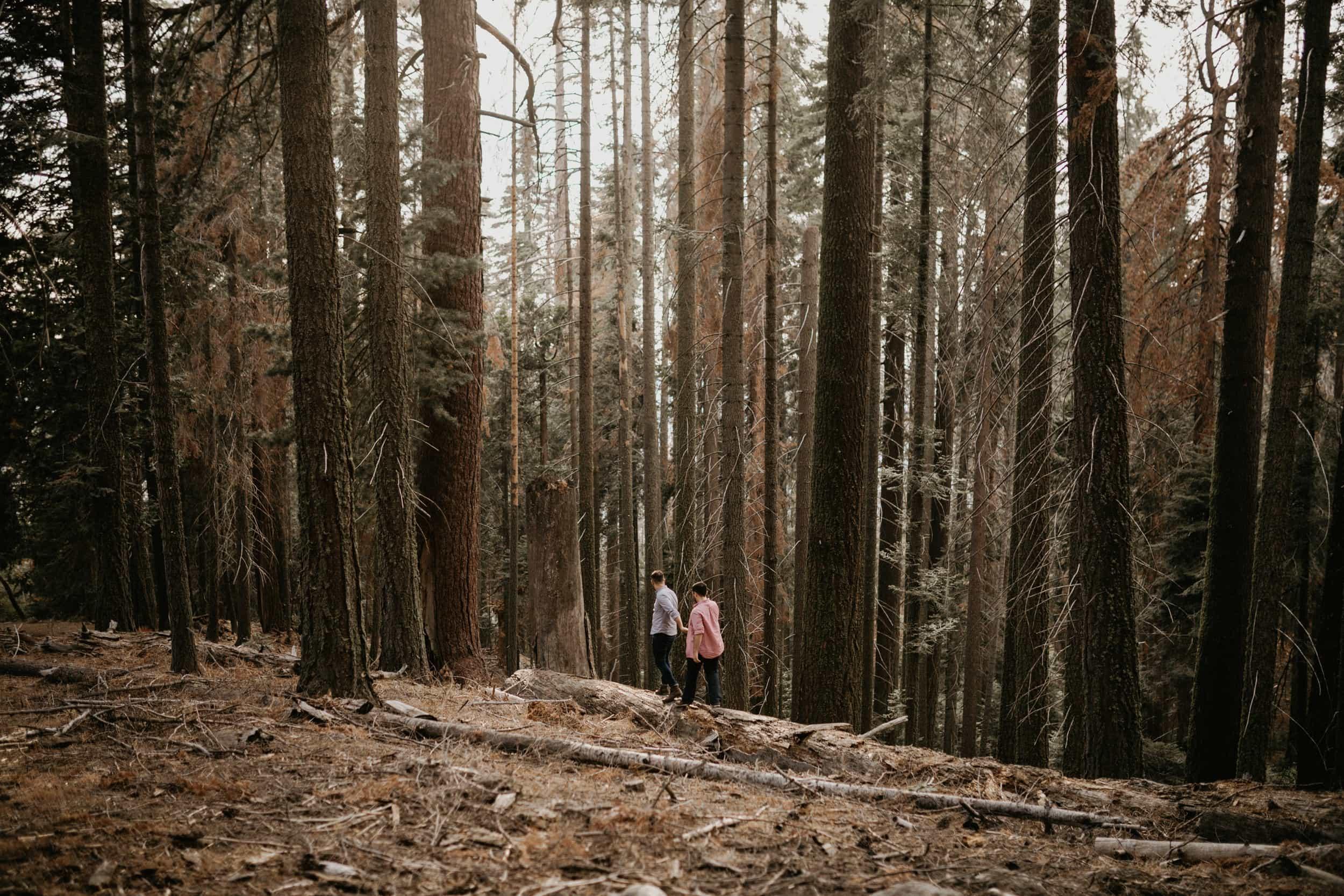 Sequoia National Park Engagement Session